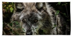 Beach Towel featuring the photograph Grey Wolf by Brad Allen Fine Art
