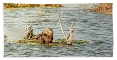 Beach Towel featuring the photograph Grinning Nutria On Reeds by Robert Frederick