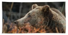 Grizzly Bear Portrait In Fall Beach Towel