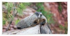 Groundhog On A Log Beach Towel by Jess Kraft