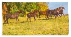 Group Of Morgan Horses Trotting Through Autumn Pasture. Beach Towel