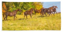 Group Of Morgan Horses Trotting Through Autumn Pasture. Beach Sheet