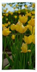 Grouping Of Yellow Tulips Beach Sheet