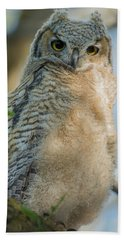 Growing Into A Great Horned Owl Beach Towel