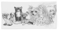 Beach Towel featuring the drawing Growing Up Chinese Crested And Powderpuff by Barbara Keith