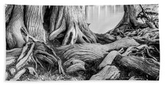 Guadalupe Bald Cypress In Black And White Beach Sheet