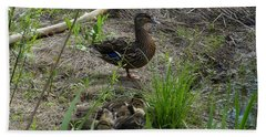 Beach Towel featuring the photograph Guarding The Ducklings by Donald C Morgan