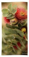 Gum Nuts Beach Towel by Werner Padarin