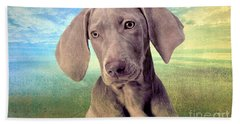Gunshy Weimaraner Looking For Loving Home Beach Sheet