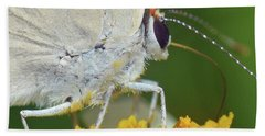 Hairstreak Closeup Beach Sheet