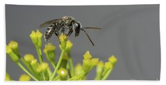 Beach Towel featuring the photograph Halictid Bee - Lasioglossum Discum by Jivko Nakev