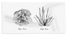 Hand Drawn Of Curly Endive And Belgian Endive Beach Towel