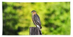 Beach Sheet featuring the photograph Handsome Hawk by Al Powell Photography USA