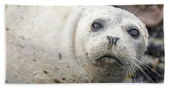 Harbor Seal Portrait Beach Sheet