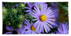 Hardy Blue Aster Flowers Beach Towel