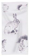 Hare Studies Beach Sheet by Archibald Thorburn