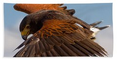 Beach Sheet featuring the photograph Harris Hawk Approach-signed-#6077 by J L Woody Wooden