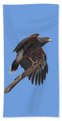 Harris Hawk - Transparent Beach Sheet