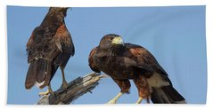 Harris Hawks Beach Towel