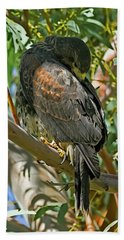 Beach Towel featuring the photograph Harris's Preening V09 by Mark Myhaver
