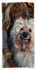 Beach Towel featuring the photograph Havanese Cutie by Sally Weigand