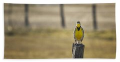 Have Audience Will Sing Beach Sheet by Belinda Greb