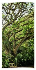 Beach Towel featuring the photograph Hawaii Tree-bard by Denise Moore
