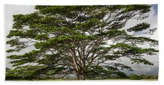 Hawaiian Moluccan Albizia Tree Beach Sheet