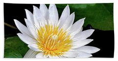 Hawaiian White Water Lily Beach Towel by Sue Melvin