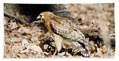 Beach Towel featuring the photograph Hawk And Gecko by George Randy Bass