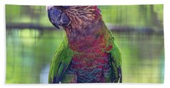 Hawk-headed Parrot Beach Towel by Nadia Sanowar