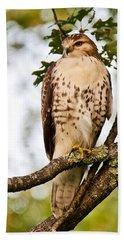 Hawk In Evening Light Beach Sheet