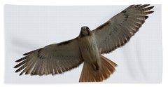 Hawk Overhead Beach Sheet