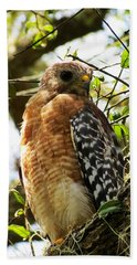Hawk Taking A Rest On A Tree In Lakeland Florida Beach Towel