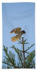 Hawk With Regal Landing Beach Towel