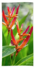 Heliconia Psittacorum Beach Sheet