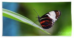 Heliconius Beach Sheet