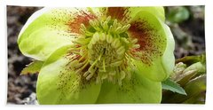 Hellebore Beach Sheet