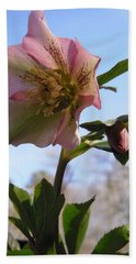 Hellebore Morning Beach Towel