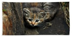 Hello Little Kitty Beach Sheet by Eric Liller