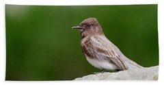 Black Phoebe Beach Sheet