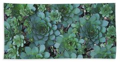 Hens And Chicks - Digital Art  Beach Towel by Sandra Foster