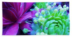 Hens And Chicks Gone Wild Beach Towel