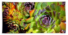 Hens 'n Chicks Beach Towel