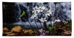 Beach Towel featuring the photograph Hepatica And Waterfall by Thomas R Fletcher