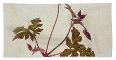 Herb Robert - Wild Geranium  #flower Beach Towel