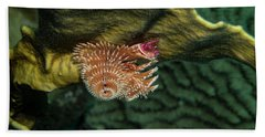 Beach Towel featuring the photograph Hidden Christmastree Worm by Jean Noren