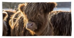 Highland Baby Coo Beach Towel