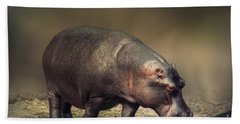 Beach Towel featuring the photograph Hippo by Charuhas Images
