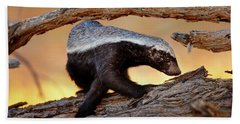 Honey Badger  Beach Towel